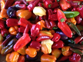 What better way to kick off a scicomm week in Sacramento than a pepper stand at the W/X farmers market?