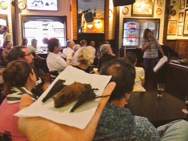 Rachael Long gives a presentation on bats at the  Davis Science Café at the G Street Wunderbar on June 10th, 2015.
